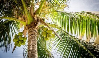 Crazy for Coconuts - 6 Surprising Health Benefits