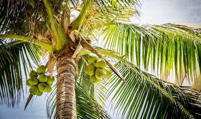Crazy for Coconuts – 6 Surprising Health Benefits