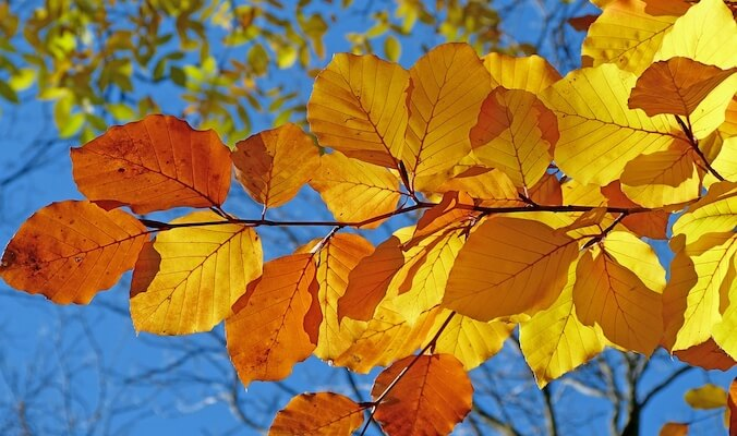 Ayurvedic Autumn Routine