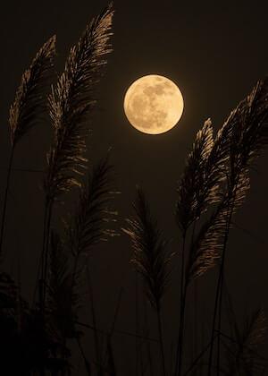 full moonn ritual