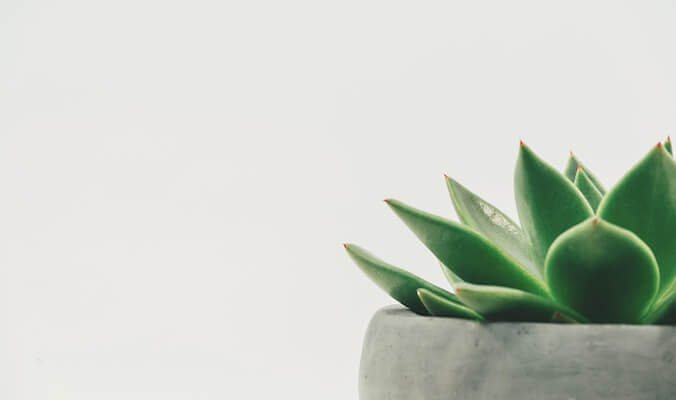 4 Ways to Practice Mindfulness with Plants